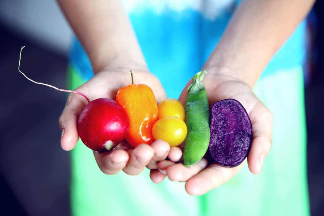 Hands holding a beet, sweet mini capsicum, cherry tomatoes, snap pea and purple sweet potato