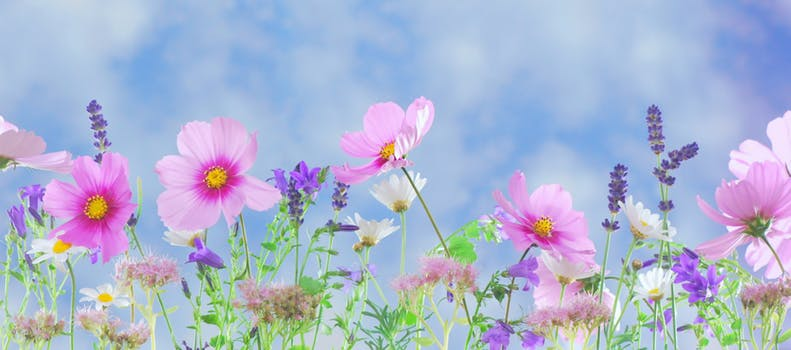Pink purple and white flowers